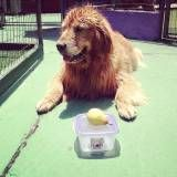 Preços de adestramento de cachorro no Jabaquara
