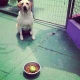 Preços de adestramento de cachorros na Pedreira