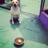 Preços de adestramento de cachorros no Campo Belo