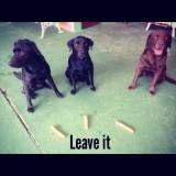 Preços de adestramento de cão no Ibirapuera