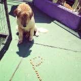 Preços de adestramento para cachorros no Jardim América