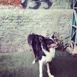 Preços de creche de cachorro no Sacomã