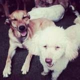 Preços de creche para cães no Ipiranga