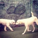 Preços de creche para cão no Morumbi
