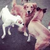 Preços de creches de cachorro na Cidade Jardim