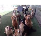 Preços de creches de cachorros no Campo Limpo