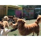Preços de creches para cachorro no Sacomã
