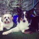 Preços de creches para cachorros no Sacomã