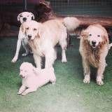 Preços de creches para cão  no Jardim Bonfiglioli