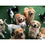 Preços de Daycare para cachorros no Jardim América