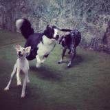 Preços de Daycare para cães no Jockey Club