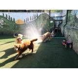 Preços de hospedagem de animais em São Lourenço da Serra