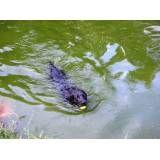 Preços de hotéis de cachorro em Osasco