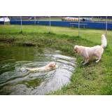 Preços de hotéis de cães em Interlagos