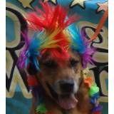 Preços de hotéis de cão no Rio Pequeno