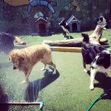 Preços de hotéis para animais no Jardim Bonfiglioli