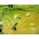 Preços de hotéis para cachorro no Morumbi