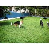Preços de hotéis para cachorros no Ibirapuera