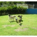 Preços de hotéis para cão em Interlagos