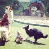 Preços de hoteizinhos de cachorros  no Jockey Club