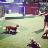 Preços de hoteizinhos para cachorro  em Cotia