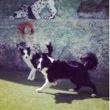Preços de hoteizinhos para cachorros  no Rio Pequeno