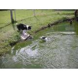 Preços de hotel de cachorros em Taboão da Serra
