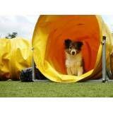Preços de hotel de cão na Cidade Jardim