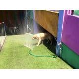 Preços de hotel para animais em Itapecerica da Serra