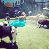 Preços de hotel para animal no Jardim Europa