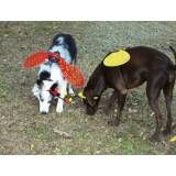 Preços de hotel para cachorro no Socorro