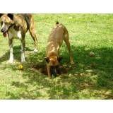 Preços de hotel para cachorros no Rio Pequeno