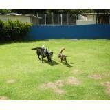 Preços de hotel para cães em Taboão da Serra
