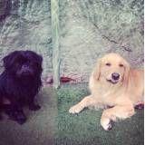 Preços de hotelzinho de cachorros  no Rio Pequeno
