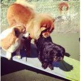 Preços de hotelzinho de cão  na Água Branca