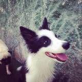 Preços de hotelzinho para cachorro  em Interlagos