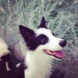 Preços de hotelzinho para cachorro  no Itaim Bibi