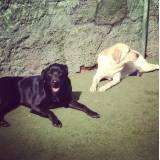 Quanto custa adestrador para cachorros em Barueri