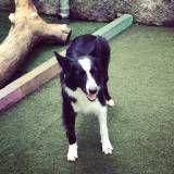 Quanto custa adestrador para cachorros no Morumbi