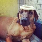 Quanto custa adestrador para cães em Alphaville