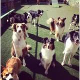Quanto custa adestrador para cães em Itapevi