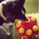 Quanto custa adestrador para cães no Ipiranga