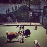 Quanto custa adestrador para cão em Alphaville