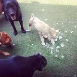 Quanto custa Daycare canino em Santana de Parnaíba