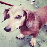 Quanto custa Daycare de cachorro no Jardim Paulista