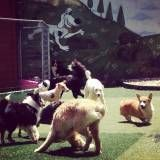 Quanto custa Daycare para cão  no Jardim Europa