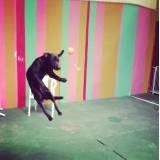 Quanto custam adestradores para cachorro em Cotia