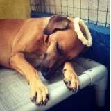 Quanto custam adestradores para cachorro no Itaim Bibi