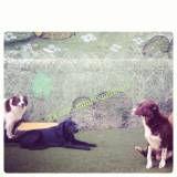 Quanto custam adestradores para cães no Rio Pequeno
