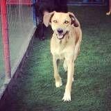 Quanto custam adestradores para cão na Vila Mariana